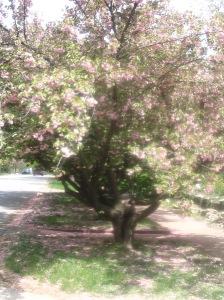 spring-0011