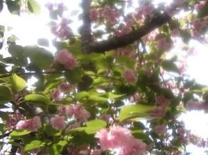spring-003
